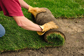 as one of the bigger gardening companies in pretoria we have the resources to offer maintenance and restoration at a low price from weeding to lawn mowing - Garden Mainenance