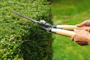 Best Garden Services in Pretoria | 012 004 1830
